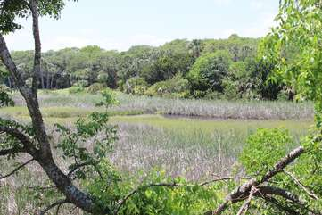 Watch deer, egrets, pelicans, and our resident bald eagles soar over the wetlands.
