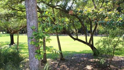 The tropical landscape offers a filtered view of the golf course.