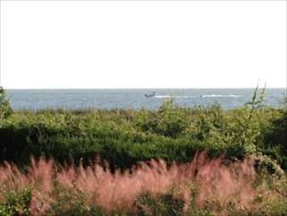 Sweet grass and wax myrtle provide a beautiful backdrop to the waters beyond.