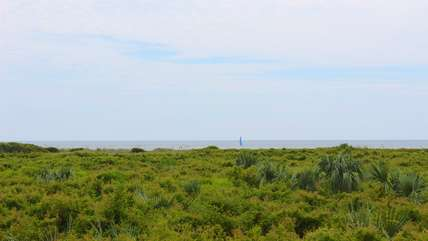 You have views of the ocean over the  wax myrtles.