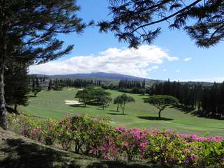 Kapalua Bay golf course from the sidewalk on a 10 min walk to the beach; WOW!!!
