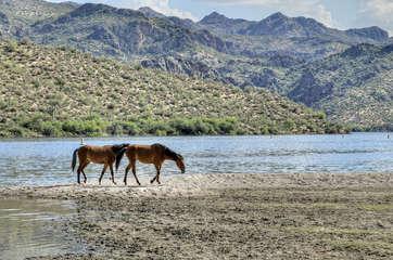 Salt river recreation offers a variety of activities